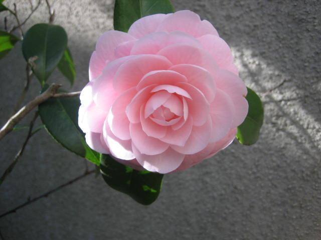 自宅の庭にも春のお花が咲いていました。_f0181251_1761566.jpg