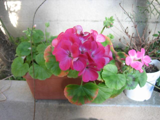 自宅の庭にも春のお花が咲いていました。_f0181251_177885.jpg