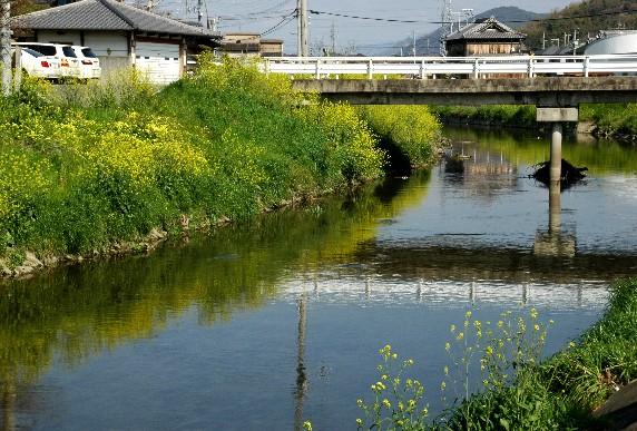 花のある風景_b0093754_001728.jpg