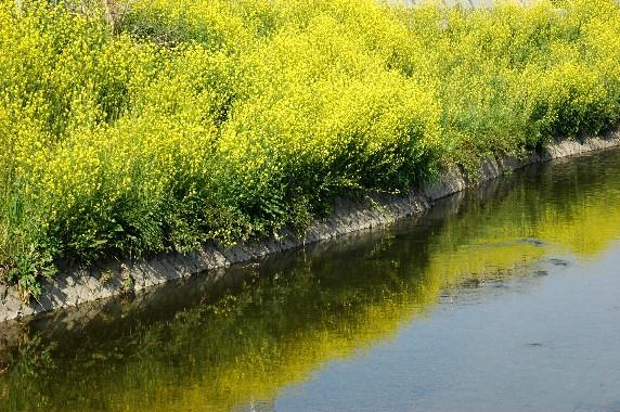 花のある風景_b0093754_00177.jpg