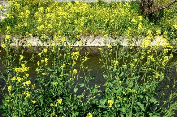 花のある風景_b0093754_23591271.jpg