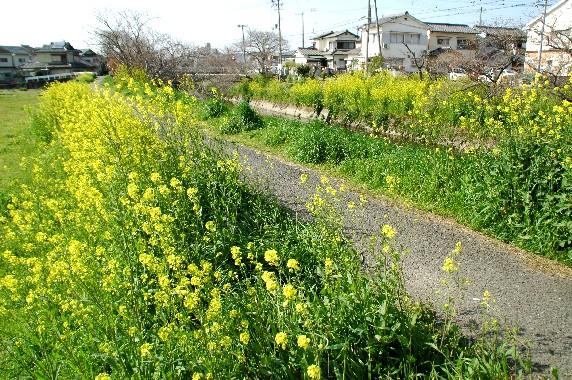 花のある風景_b0093754_2359416.jpg