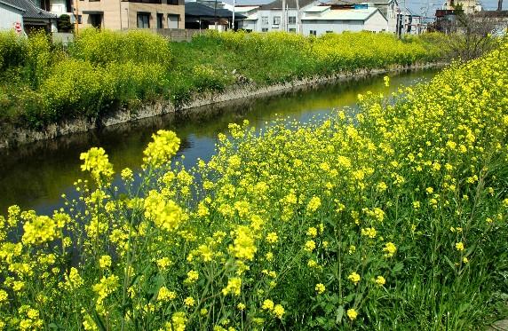 花のある風景_b0093754_23595222.jpg