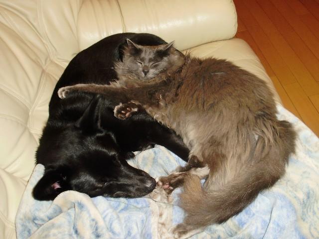 犬と猫と_f0066862_12474412.jpg