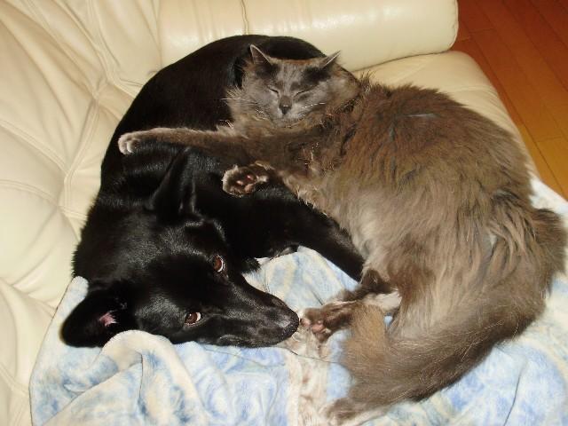 犬と猫と_f0066862_125152100.jpg
