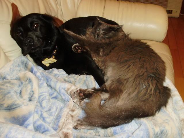 犬と猫と_f0066862_12524682.jpg