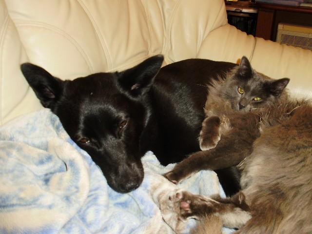 犬と猫と_f0066862_125411100.jpg