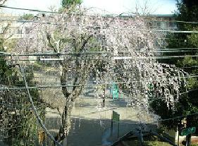 春の恵み_f0139963_747949.jpg