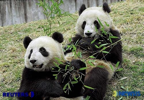 中華基準_a0047491_16264052.jpg
