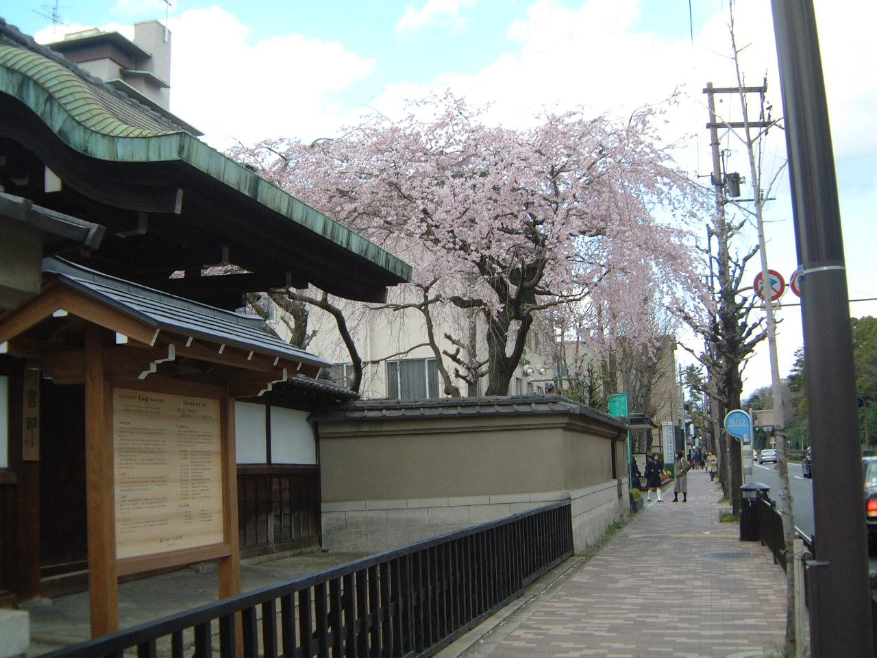 御所のしだれ桜♪_f0028791_19555996.jpg