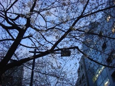 桜の通り道_b0151300_18103492.jpg