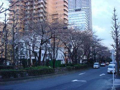 桜の通り道_b0151300_1891044.jpg