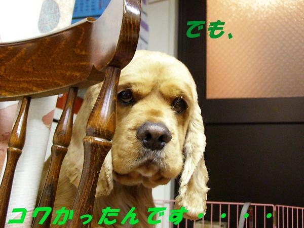 b0067012_23401058.jpg