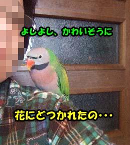 c0133013_15541276.jpg