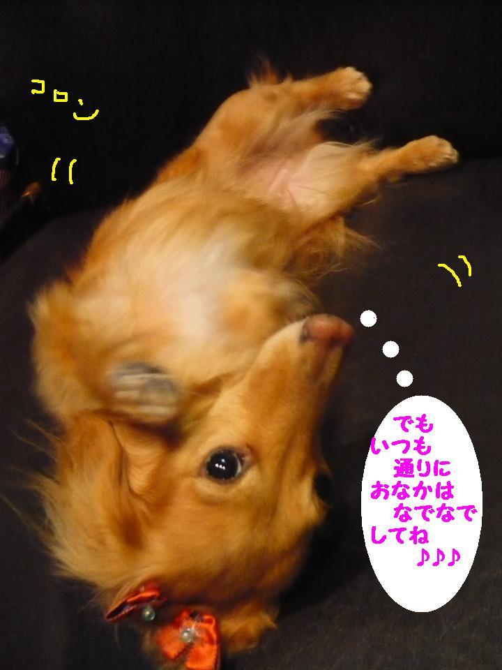 写真嫌い&あまいマスク&犬濯屋レシピ!!_b0130018_11325036.jpg