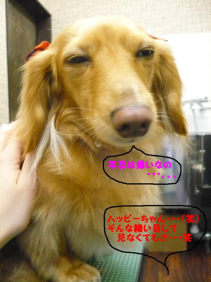 写真嫌い&あまいマスク&犬濯屋レシピ!!_b0130018_1133887.jpg