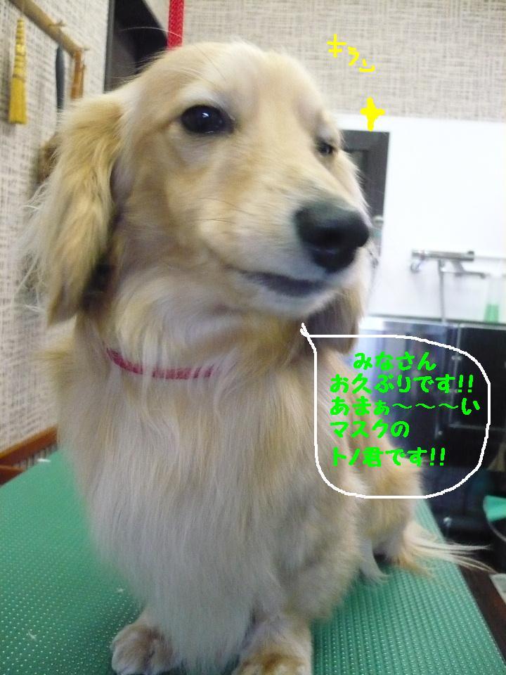写真嫌い&あまいマスク&犬濯屋レシピ!!_b0130018_11344312.jpg