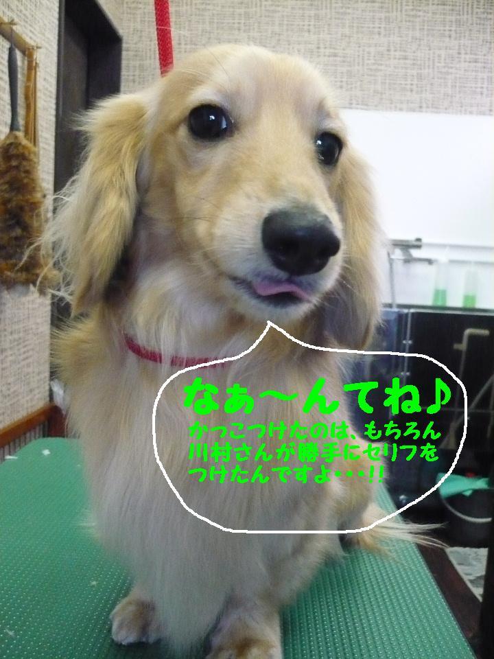 写真嫌い&あまいマスク&犬濯屋レシピ!!_b0130018_11351530.jpg