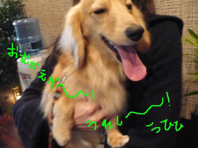 写真嫌い&あまいマスク&犬濯屋レシピ!!_b0130018_11362048.jpg