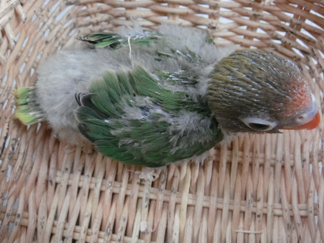 小鳥・カメ_f0189122_17132261.jpg