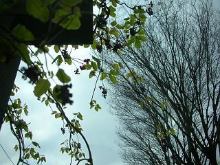 美しい季節がくる_c0102228_20591373.jpg
