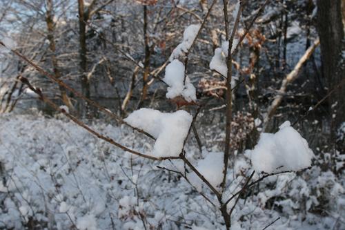 雪の朝_a0087133_6474225.jpg
