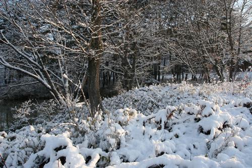 雪の朝_a0087133_647714.jpg
