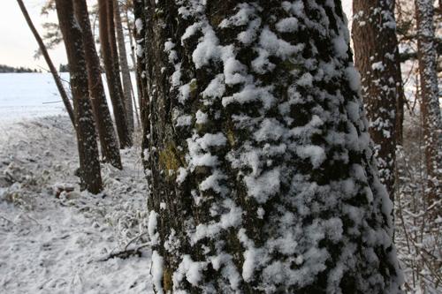 雪の朝_a0087133_648062.jpg