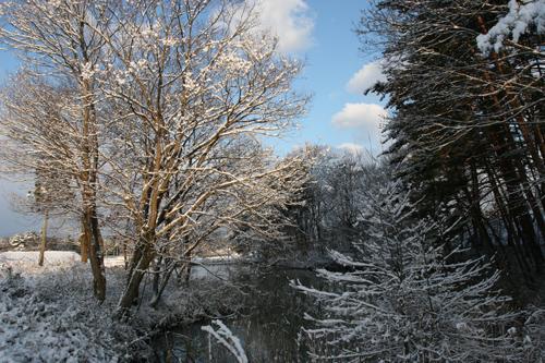 雪の朝_a0087133_6481869.jpg