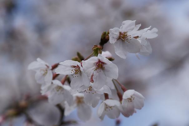 昨日はやっぱり春爛漫?ですやん!_f0056935_2163769.jpg