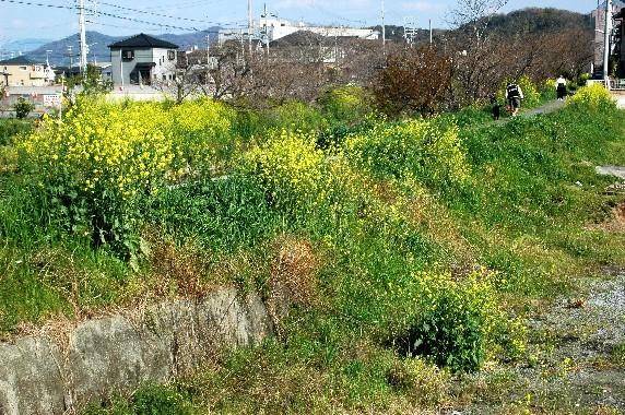 花のある風景_b0093754_002511.jpg