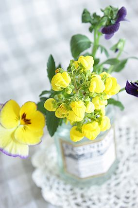 とれたて山葵で、わさびごはん。_e0173666_724118.jpg