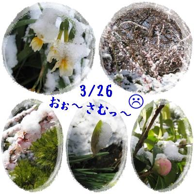 f0175279_234849.jpg