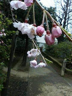 春なのに_a0075684_23202959.jpg