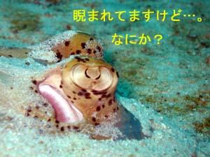 4日連チャンのラチャヤイ島_f0144385_18381574.jpg
