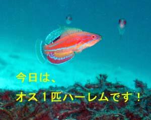 4日連チャンのラチャヤイ島_f0144385_18424510.jpg