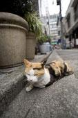 猫のはなし おけさのひょう六 _c0027188_4511667.jpg