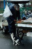 猫のはなし おけさのひょう六 _c0027188_4515635.jpg