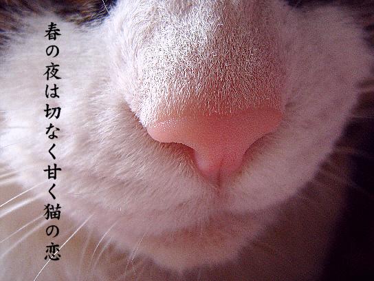 猫の恋_e0099713_20281824.jpg