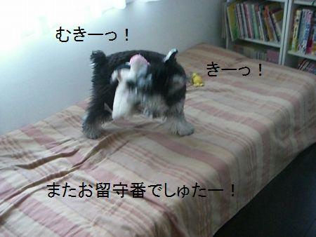 f0197317_16584839.jpg