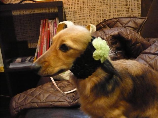 犬濯屋オリジナル スヌード♪_b0130018_17202573.jpg