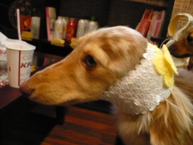 犬濯屋オリジナル スヌード♪_b0130018_17205659.jpg