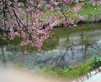 そろそろ桜かな~?_b0121719_2273739.jpg