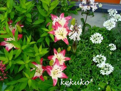 f0170524_1054814.jpg