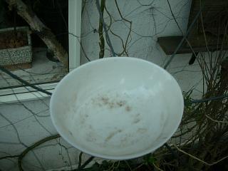 小鳥的番長ライフ_c0102228_21101069.jpg