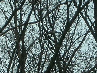 小鳥的番長ライフ_c0102228_215135.jpg