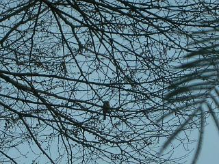 小鳥的番長ライフ_c0102228_215160.jpg