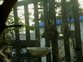 小鳥的番長ライフ_c0102228_219440.jpg