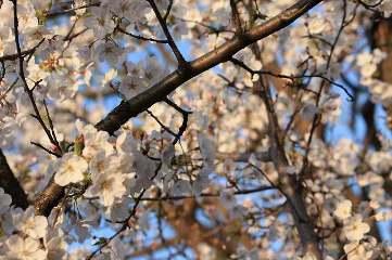 季節的に。。。_c0127029_10331981.jpg