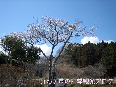 f0105342_12443215.jpg